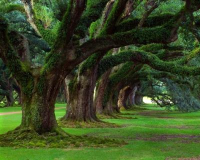 Tu BiShvat – Aprendiendo de los árboles
